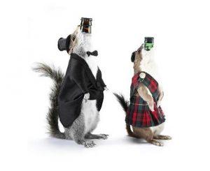 Un esempio di packaging estremo, le bottiglie-scoiattolo di BrewDog
