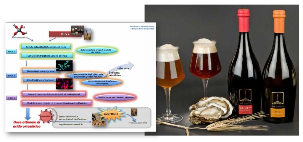 beerbone