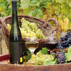 vino-uva