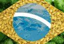 Birra Artigianale in Brasile: 148 nuove birrerie nel 2016