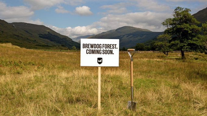 brewdog-forest