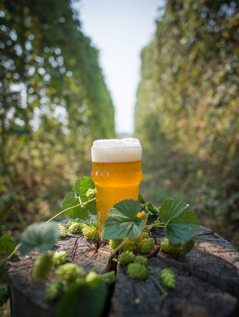 birra nel luppoleto